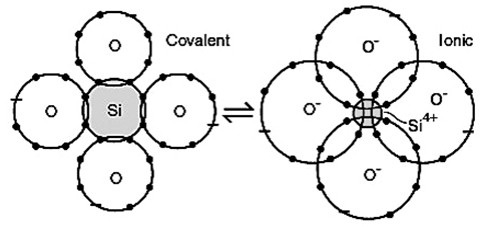 Ionic and Covalent Bonding in Relationships and Biology by