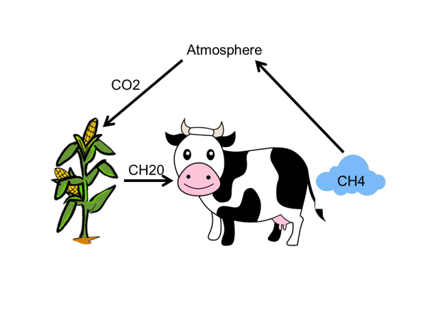 cow-fart-as-carbon-cycle-model