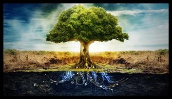 tree-energy-roots